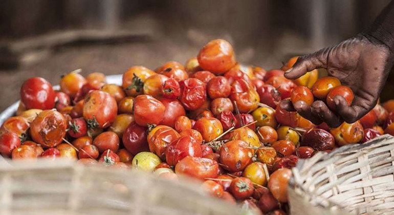 Transform food systems to avert $400 billion annually in loss and waste | UN News – SDGs