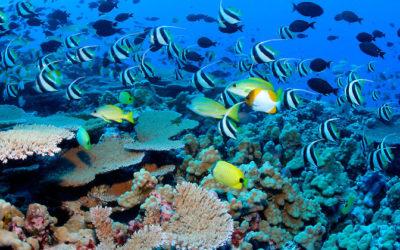 Decade of climate breakdown saw 14 per cent of coral reefs vanish | UN News – SDGs